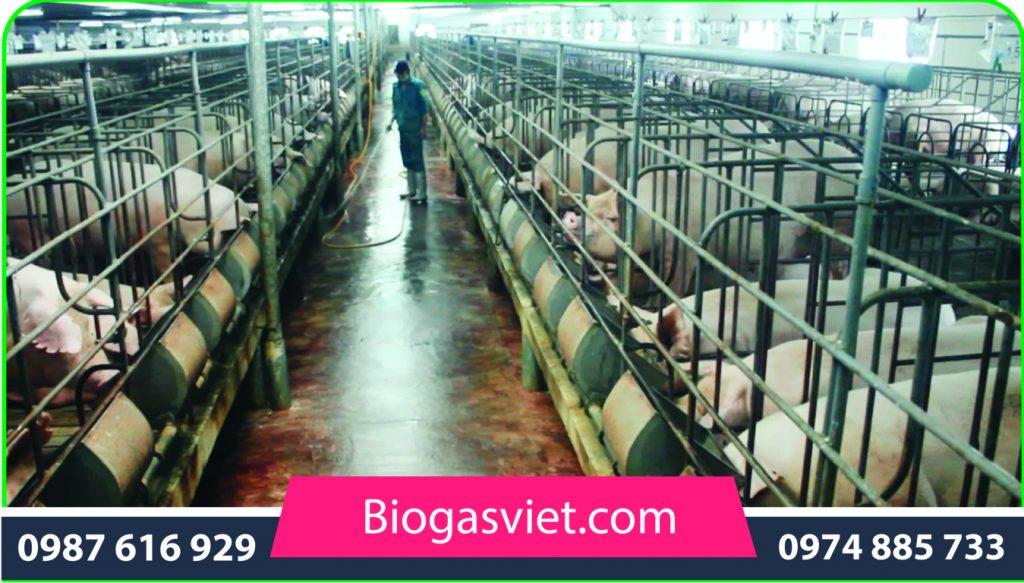 xu ly nuoc thai chan nuoi bang ham biogas-05 khoaNK