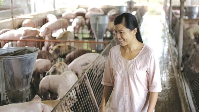 Chăn nuôi heo theo mô hình trang trại hiện đang có bước phát triển mạnh ở nước ta hiện nay, đây là một hình thức chăn nuôi an toàn mang đến hiệu quả kinh tế cao. Trong đó, chăn nuôi heo siêu nạc được phần lớn bà con lựa chọn bởi năng suất cao, dễ […]
