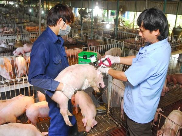 Chăn nuôi hiện nay đang là một ngành chủ đạo trong sự phát triển của hoạt động sản xuất nông nghiệp ở nước ta. Trong đó, chăn nuôi heo nhận được sự đầu tư nhiều nhất, bởi hiệu quả mang đến từ hoạt động này rất lớn, hơn nữa còn đáp ứng được nhu cầu […]