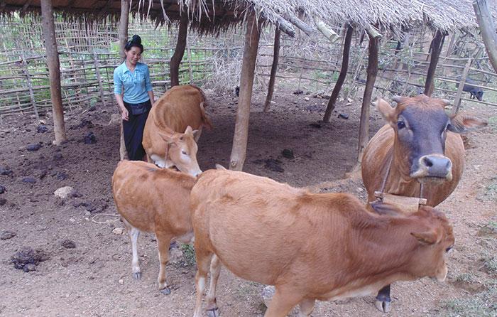 ba con hương ung lam ham biogas