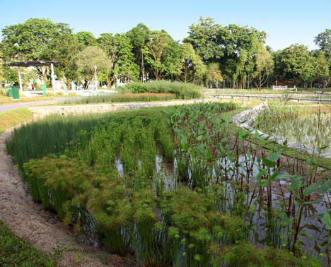 công nghệ xử lý nước thải bằng thực vật