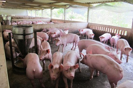 Ảnh hưởng chăn nuôi đến môi trường