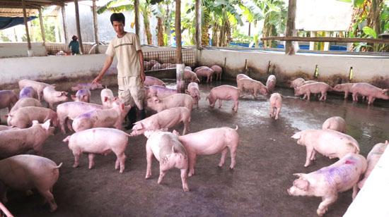 Mô hình chăn nuôi khép kín