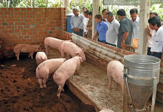Nguyên tắc của hoạt động chăn nuôi heo an toàn sinh học