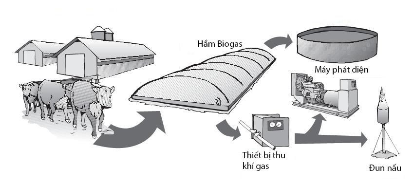 mô hình hầm biogas trong chăn nuôi