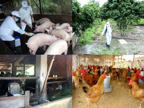 phòng bệnh cho vật nuôi gia súc
