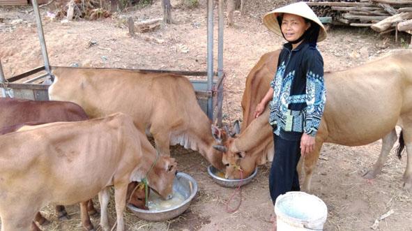 phòng dịch bệnh cho vật nuôi