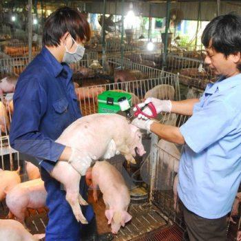 phòng chống dịch bệnh chăn nuôi heo