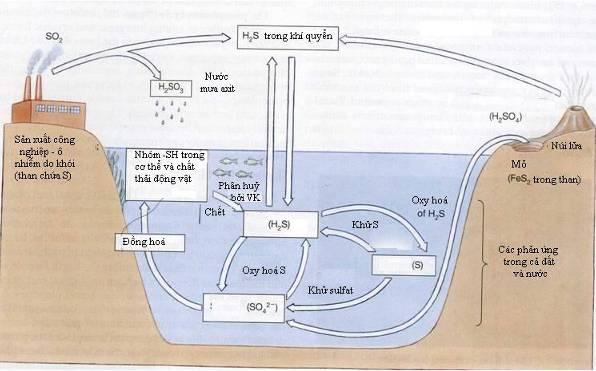 khi hydro sunfua va tac hai (1)