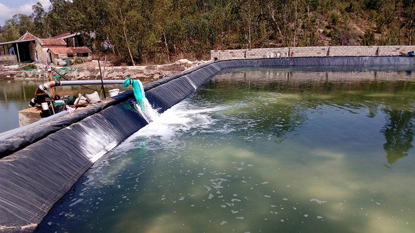 Xử lý nước thải hồ nuôi tôm