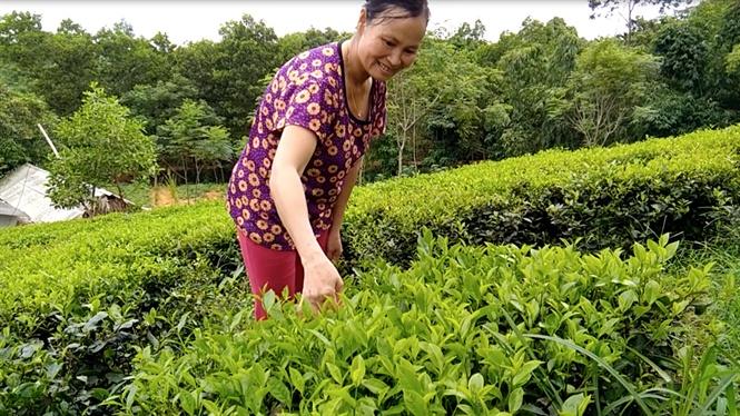 tan dung nuoc thai sau biogas (1)