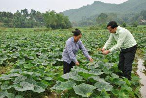 tan dung nuoc thai sau biogas (4)
